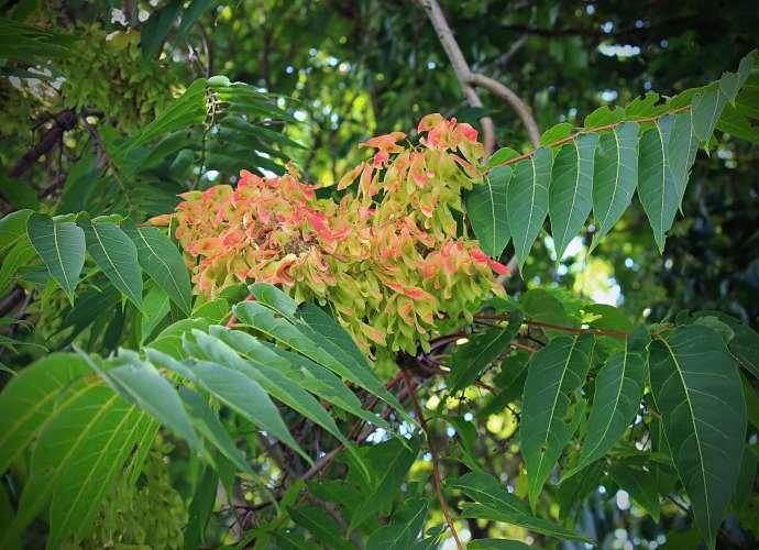 Dzięki akcji adopcji drzew polska fundacja Biodiversitatis planuje wykupić 30 ha lasu tropikalnego w południowej Kolumbii
