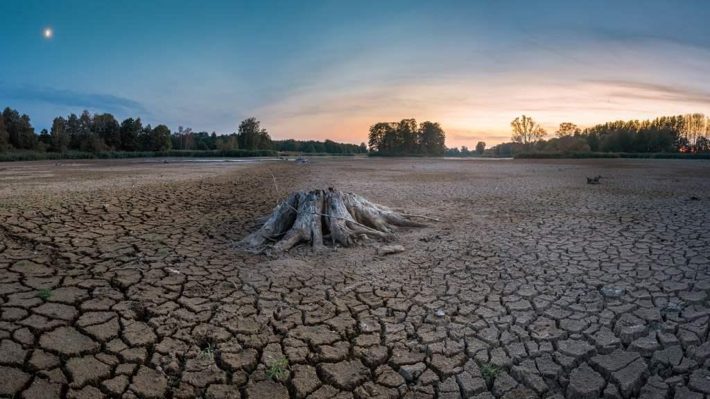 Światowy Dzień Walki z Pustynnieniem i Suszą