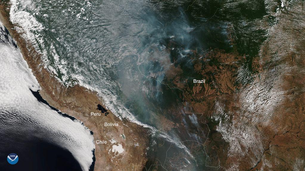 Gigantyczne pożary brazylijskich lasów widoczne są już z kosmosu