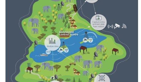 Technologie Cisco pomagają zwalczać kłusowników polujących na słonie