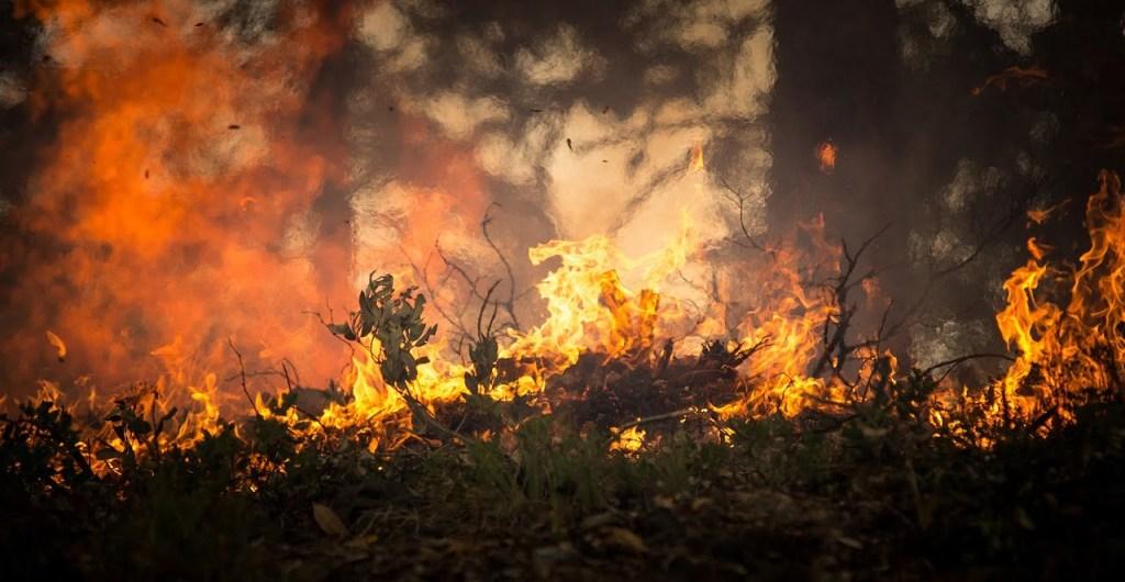 Z powodu suszy drzewa są atakowane przez korniki i rośnie ryzyko pożarowe