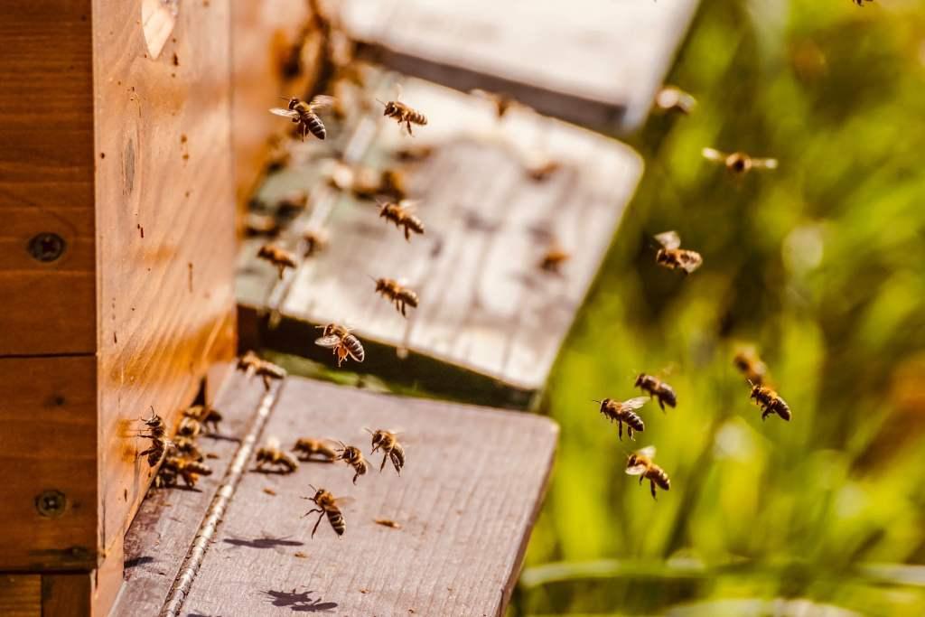 Powstał naturalny lek z grzyba na chorobę zakaźną pszczół - zgnilca złośliwego