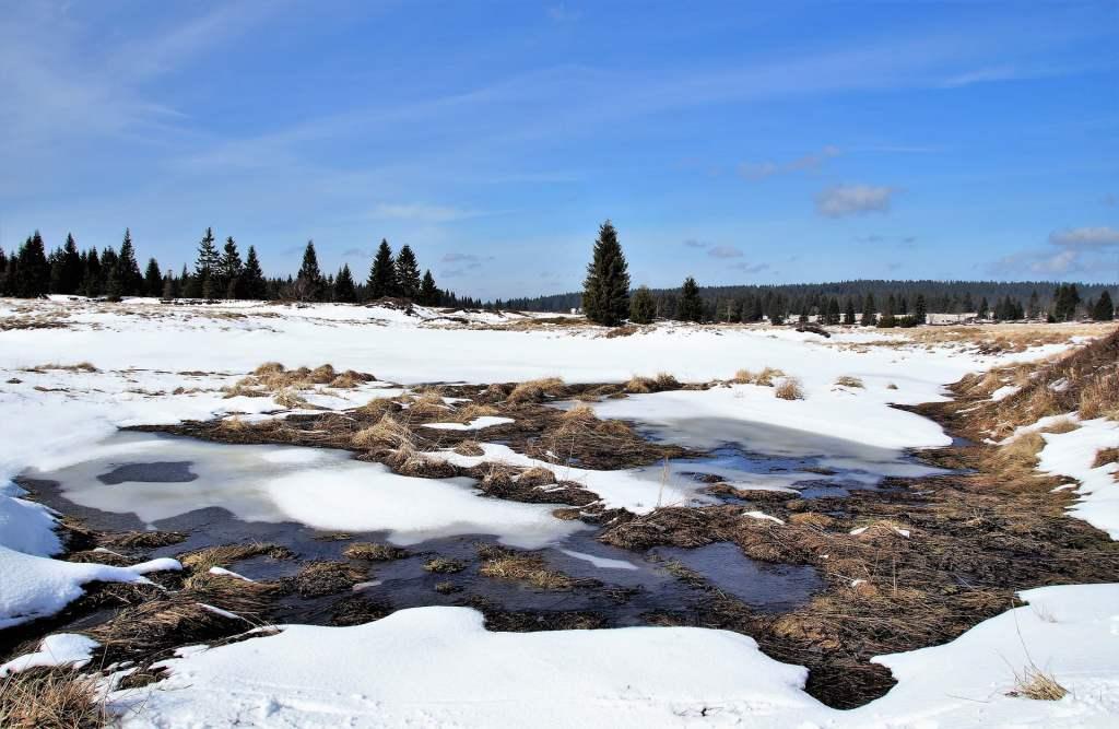 Wysokie temperatury na Syberii zaburzają ekosystem tamtejszych torfowisk