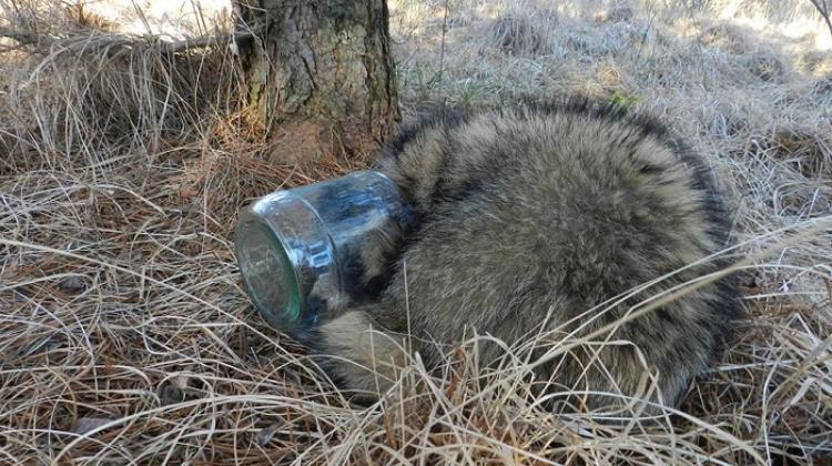 Bezkręgowce, ptaki, ryby, płazy, gady i ssaki giną z powodu śmieci i odpadków pozostawionych przez ludzi na świecie