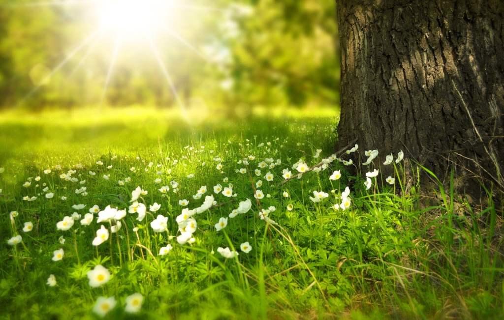 Na nadejście wiosny przygotowują się ogrody botaniczne w całym kraju