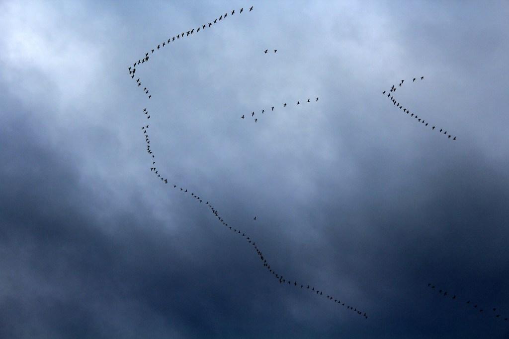 Wędrowne ptaki mogą pomóc roślinom w radzeniu sobie z globalnym ociepleniem
