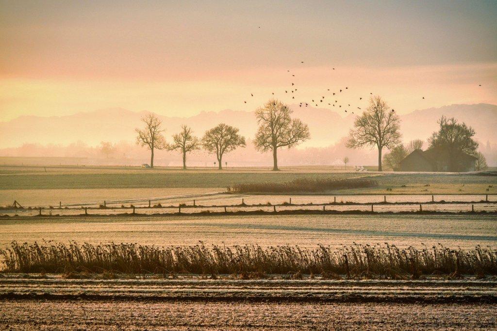 Różnice w populacjach ptaków na styku Austrii i Czech to odległy efekt Żelaznej Kurtyny