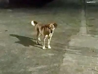 Psy bez kagańca! Czy ktoś rozwiąże problem?