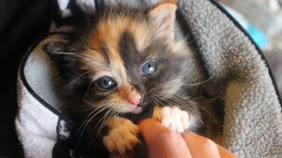 with kitten season is