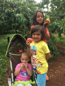 Peach Picking!