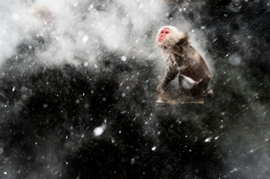 Creative Visions Winner Snow moment Jasper Doest (The Netherlands) When photographing the famous Japanese macaques around the hot springs of Jigokudani, central Japan, Jasper had become fascinated by the surreal effects created by the arrival of a cold wind. Occasionally, a blast would blow through the steam rising off the pools. If it was snowing, the result would be a mesmerising pattern of swirling steam and snowflakes, which would whirl around any macaques warming up in the pools. But capturing the moment required total luck – for Jasper to be there when the wind blew and for the monkeys to be in the pool. For that luck to arrive, he had to wait another year. Returning the next winter, he determined to get the shot he'd been obsessing about. He set up using a polariser to remove reflections from the water and create a dark contrasting background, and got ready to use fill-flash to catch the snowflakes. 'As it kept snowing, I stood there, willing the wind to pick up. I felt it just had to happen – sometimes you can push your luck if I you just wait long enough.' But as the steam started swirling above the water, there wasn't a monkey in sight. 'All of a sudden one adult appeared and jumped on a rock in the middle of the pool. When I started shaking off the snow, I knew this was the moment.' Nikon D4 + 24-70mm f2.8 lens at 55mm + polarising filter; 1/100 sec at f11; ISO 1600; Nikon SB-800 flash.
