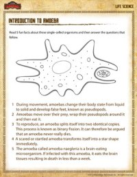 Introduction to Amoeba  Free Life Science Worksheet for ...