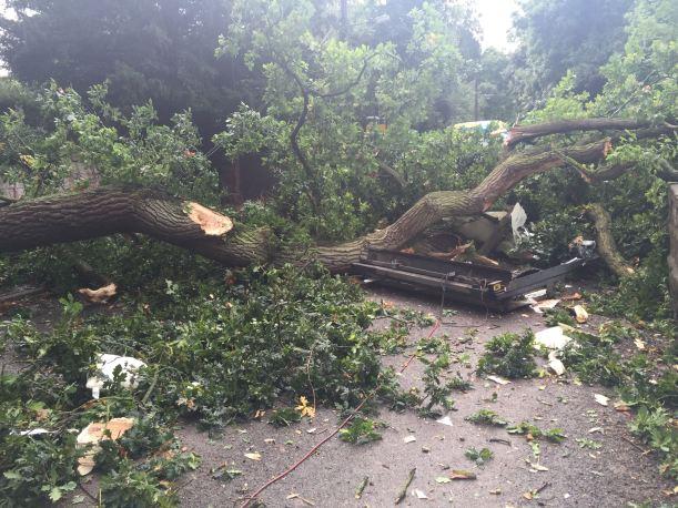 betley-tree-fall-10-09-16-3