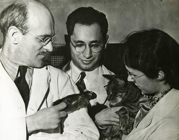Psychiatrists testing a cat's reaction to the news that Global Warming will cause an increase in mice.