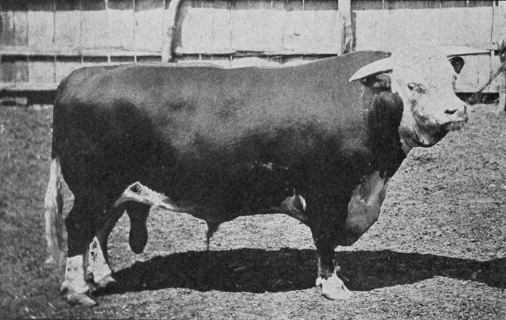 This is a bull. And what comes out of this animal?