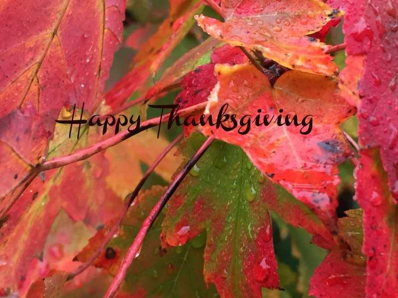 WN/FM Happy Thanksgiving