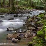 Wasserhaushalt gestern, heute und morgen – interessante Forschungsarbeiten werden im Nationalpark vorgestellt