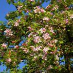 St. Wendeler Land: Förderung von Streuobstwiesen und Blühflächen