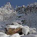 Nationalpark-Rangertouren im Winter