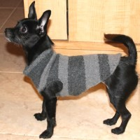How To Turn Old Sweaters and Sweatpants Into No-Sew Dog ...