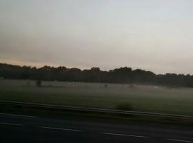 Grazing animals at dawn