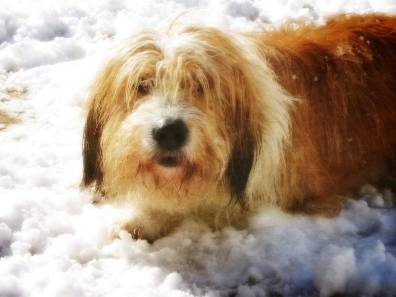 Rasty Loves Snow