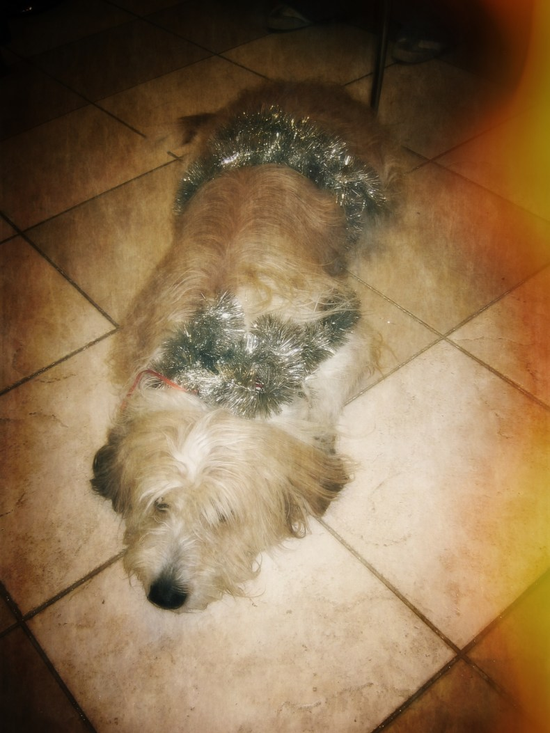 Rasty Celebrating Christmas