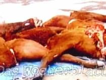 Viehdiebe schlachteten zwei Stiere des Ex-Präsidenten Raúl Cubas Grau