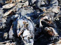 Rätselhaftes Fischsterben am Pilcomayo