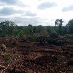 Wieder 700 Hektar weniger