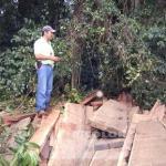 Waldschlag und keine Konsequenzen