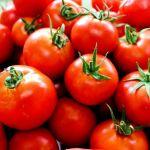 Das schwere Leben eines Tomatenproduzenten in Paraguay