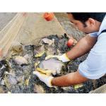Fischzucht für Seen und Flüsse