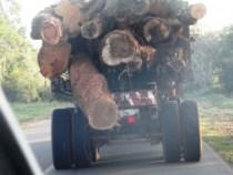 Keine Kontrollen beim illegalen Holztransport