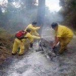 Erneuter Großbrand in einem Nationalpark