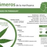 """""""Marihuana aus Paraguay oder Produzenten bezuschussen"""""""