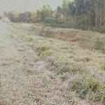 Alto Paraná: Frostschäden in Höhe von 700 Millionen PYG