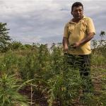Paraguay: Marihuana ist legal
