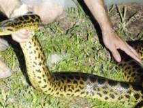 Schlangen statt Fische