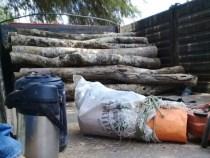 Mennonit zeigt Abholzung an