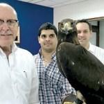 Der erste Adler in Mittel- und Südamerika