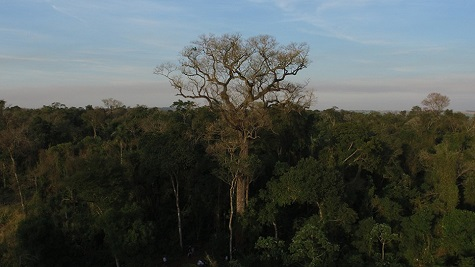 Beeindruckende Kolosse in Paraguay