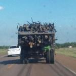 Paraguay gewinnt am meisten Energie aus der Holzverbrennung