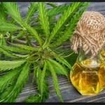 Cannabis Öl in Paraguay nun offiziell zum Verkauf freigegeben