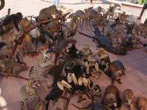 Deutsche und ihre Vorliebe für Tiere