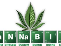 Heilpflanzen und Cannabis