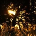 Neues Forstgesetz entfacht Streit zwischen Umweltschützern und Produzenten