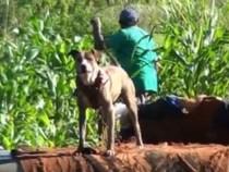 Staatsanwalt hat ein Herz für Tiere