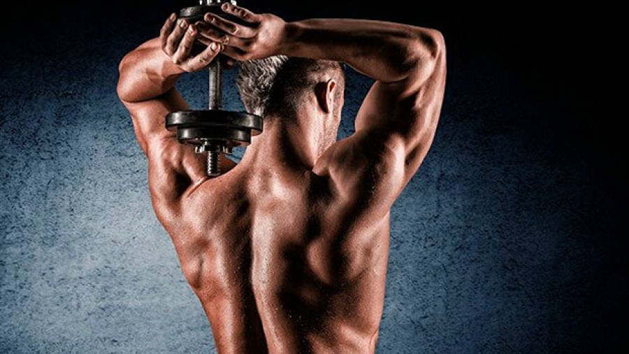 10 exercices triceps