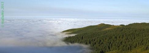Wolkenmeer geht über in Wald / Madeira